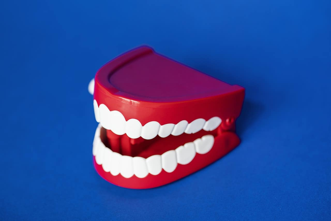 artificial teeth stock
